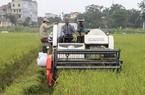 """Khắc phục """"điểm đen"""" ngành lúa gạo: Cần chuỗi liên kết đúng nghĩa"""