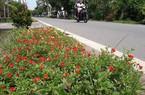 TP.Hồ Chí Minh: Nhiều xã cùng về đích nông thôn mới nâng cao
