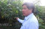 Dịch khảm lá sắn khó diệt, Bộ NNPTNT 4 lần làm việc với Tây Ninh