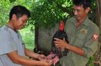 """Clip: Siêu trang trại la liệt con đặc sản siêu """"độc"""" ở Ninh Bình"""