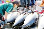 """Xuất khẩu cá ngừ đảo chiều: Mỹ xếp đầu bảng, ASEAN cũng """"ăn mạnh"""""""