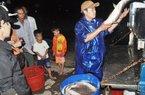 Xem người dân Thừa Thiên Huế bắt cá, tôm vượt lũ