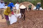 """200 triệu tấn chất thải hữu cơ: Đem làm phân bón, biến """"mỏ vàng"""""""
