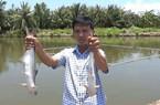 Nuôi 4.000 con cá bông lau nước lợ, bán giá cao, lời cả trăm triệu