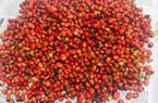 """Hơn trăm nghìn một hạt """"bé tẹo"""", muốn mua cũng khó"""