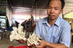 Thanh Hóa: Bỏ việc nhà nước về kiếm 300 triệu/năm từ trồng nấm