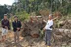 Lâm Đồng: Khởi tố vụ ngang nhiên mở đường phá gần 2,5ha rừng