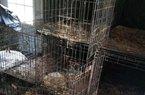 """Khám nhà cặp vợ chồng chuyên giải cứu chó mèo, phát hiện sự thật """"ngoài sức tưởng tượng"""""""