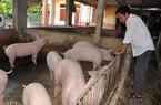 Giá heo hơi hôm nay 26/9: Miền Bắc biến động, lợn đi Trung Quốc gặp khó