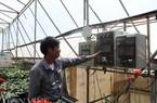 Lâm Đồng: Sản xuất rau thủy canh đạt hơn 8 tỷ đồng/ha/năm