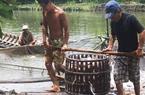 """Đồng bằng sông Cửu Long: Người nuôi cá """"thèm"""" vốn ưu đãi"""