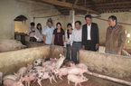 Tiếp sức kịp thời cho người chăn nuôi