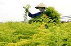 Nông nghiệp cứu cả nền kinh tế