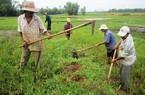 Bình Định: Diệt chuột bảo vệ vụ đông xuân 2013- 2014