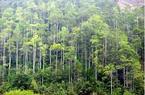 Quảng Ninh: Trồng rừng tập trung đã vượt kế hoạch