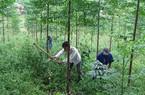 Bình Định: Trồng 2.500ha rừng nguyên liệu giấy