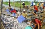 Năm 2014: Tôm, cá tra vẫn là thủy sản xuất khẩu chủ lực