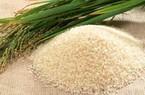 Nhật Bản ngừng hỗ trợ sản xuất lúa gạo