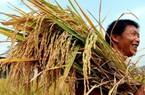WB dự báo: GDP Việt Nam năm 2015 đạt 5,5%