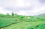 """NTM trên Đất Tổ: Tạo tiền đề phát triển """"tam nông"""" bền vững"""