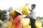 """Giá lúa lên """"cơn sốt"""", nông dân ĐBSCL tiếc hùi hụi vì... hết lúa"""