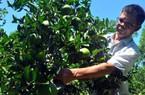 Hà Tĩnh: Làm vườn mẫu nông thôn mới mà có thu nhập... như mơ!