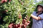 10 tỷ USD cho xuất khẩu rau quả: Xem thị trường trước khi sản xuất