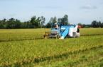"""Ra mắt nhóm đối tác công tư xử lý các vấn đề """"nóng"""" của ngành gạo"""