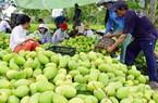 """""""Thiên la, địa võng"""" chặn hàng nông sản Việt xuất ngoại (Kỳ 1)"""