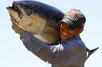 Ảnh: Thủ phủ cá ngừ đại dương tại Phú Yên