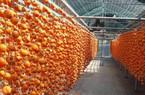 Nông nghiệp 4.0: Sấy hồng Đà Lạt  theo công nghệ chuẩn Hàn Quốc