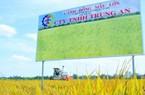 Bán gạo vào siêu thị Vinmart của tỷ phú Phạm Nhật Vương, Trung Anh lãi 16 tỷ và chuẩn bị niêm yết