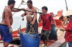 Cà Mau: Nuôi loài cá háu đói giữa trùng khơi, dân đổi đời