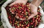 Giá cà phê hôm nay tăng khá dịp lễ Giáng sinh, giá tiêu giảm nhẹ