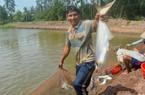 Từ nghèo khó vươn lên khá giả nhờ nuôi cá bông lau