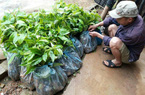 Lạng Sơn: Chênh lệch 1,2 tỷ đồng cấp cây giống cho xã khó khăn
