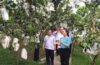 Vườn bưởi Phó Chủ tịch Hội NDVN thăm có gì đặc biệt?
