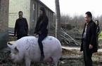 """Khan hiếm thịt, Trung Quốc nhân giống lợn """"siêu to khổng lồ"""""""