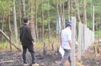 Đà Lạt: Giải tỏa nóng khu vực đất rừng bị phân lô, bán nền