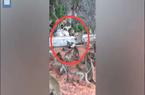 Thái Lan: Đồng loại bị trăn lớn siết chặt, hàng chục con khỉ xông vào giải cứu