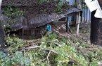 Phú Yên: Bão số 5 khiến nhà sập, cây đổ, nhiều xã, phường mất điện