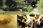 """Viwasupco xả thải không thông báo, suối đổi màu đọng đầy """"bùn đen"""""""