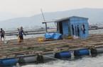 """Phú Yên: Nơi nguy cơ """"yết hầu"""" bão dữ"""