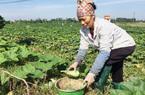 Làm nông nghiệp an toàn từ những điều nhỏ nhất