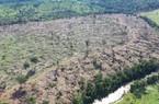 """""""Cơn khát"""" của Trung Quốc khiến rừng Amazon hứng chịu hậu quả hủy diệt"""