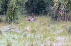 Video: Báo hoa mai bị trăn tung đòn siết chặt và kết cục bất ngờ