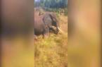 Video: Hãi hùng cảnh dân làng cầm mã tấu, rìu đâm chém voi rừng đến chết