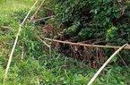 Vụ phát hiện nửa thi thể trong bụi rậm: Công an tìm được phần đầu