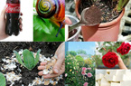 """6 loại phân bón """"thần thánh"""" được chế từ đậu phụ, vỏ chuối, coca,.."""