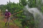 Lượng thuốc trừ cỏ được sử dụng tăng chóng mặt